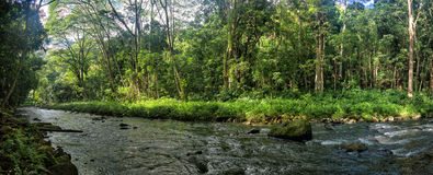 Small river on Kauai Royalty Free Stock Photography