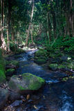 Small river on Kauai Royalty Free Stock Photos