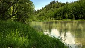 Summer river in the mountains, lush plants. A small river among lush plants. Mountainous terrain, summer landscape in good quality Royalty Free Stock Photo