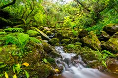 Small river mkaing its way through rocks and green Madeira woods, Portugal royalty free stock image