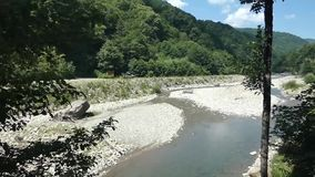 Small river near forest in the mountains, summer sunny day stock video footage