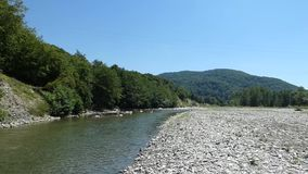 Small river near forest, summer sunny day stock video footage