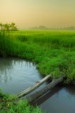 Small river at paddy field. Small river near paddy field on the morning Royalty Free Stock Photo