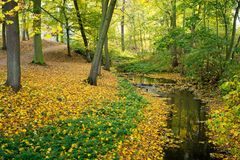 Small river in the park. Autumn mood stock photos