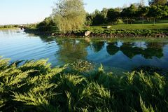 Calm water of a little river. A small river in the park, with green beaches, on which grass and fern grows Stock Image