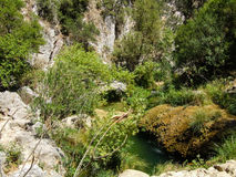 Small River with rocks Royalty Free Stock Photos