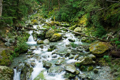 Small river on routeburn track stock photo