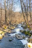A small river running through the forest on a cool later winter day royalty free stock photo