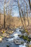 A small river running through the forest on a cool later winter day royalty free stock image
