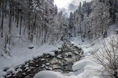Winter scene at a river stock photo