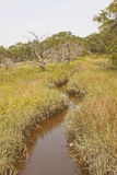 Small River Running Through Wetland Marsh. A river running through the grasses in a wetland marsh Stock Photography