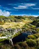 Small river in rural valley. Small river flowing through little valley in new zealand Royalty Free Stock Photography