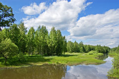 The small river Sherna, Russia. The small Russian river in an environment of a cane and trees stock photo