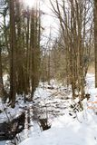 Small river in the snowy forest Stock Photo