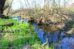 Small river on spring Stock Photography