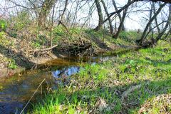 Small river on spring Stock Image