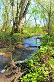 Small river on spring Royalty Free Stock Photography