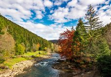 Small river in spruce forested mountains. With some trees in red foliage. camping place behind the fence on a grassy meadow. gorgeous landscape under vivid Royalty Free Stock Photo