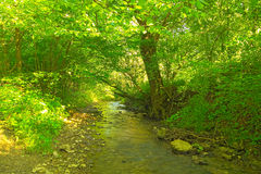 Small river. With stones and trees Royalty Free Stock Photo