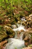 Small river stream waterfall in the forest natural environment Stock Image