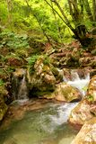 Small river stream waterfall in the forest natural environment Royalty Free Stock Images