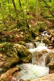 Small river stream waterfall in the forest natural environment Stock Photos