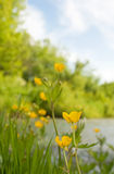 Small river in summer day Royalty Free Stock Photos