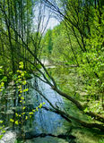 Small river in summer forest Royalty Free Stock Photo
