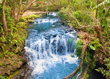 The small river with thresholds in the tropical nature. Mauritius Stock Photography