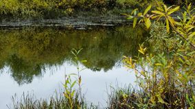 Small river with trees reflection on the water at the autumn time. Plays the fish in the water stock footage