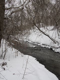 Small river with trees in winter Stock Image