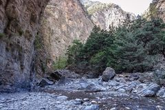 A landscape with rivers and trees in the foothills of large mountains. A small river with a very rocky bed; a landscape with rivers and trees in the foothills of Stock Photography