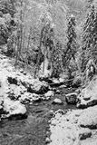 Small river in winter in Chartreuse Black and white royalty free stock photo