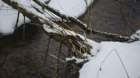 Small river in the winter and dry fallen tree. Over it closeup stock video footage