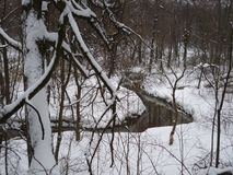 Small river in the winter forest of Kuzminki Park in Moscow royalty free stock images