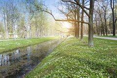 Free Small River With A Duckweed, A Channel In The Park, Birches On Coast And The Blossoming Snowdrops Royalty Free Stock Photos - 118324178