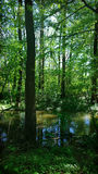 Small river in wood with trees reflection. Bavaria, Germany  - River in the woods on summer Stock Image