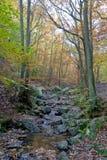 Small river, woods autumn, Ardens, Wallonia, Belgium Royalty Free Stock Photo