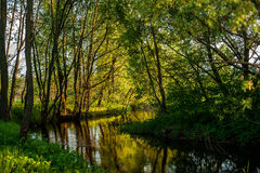 Small river in woods Royalty Free Stock Photos