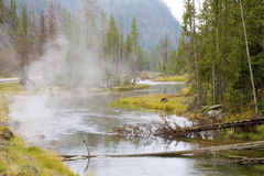 Small River in Yellowstone Royalty Free Stock Photos
