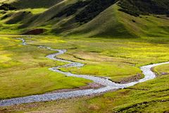 Small rivers in alpine meadows Stock Images