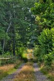 Small road. A small road going into the forrest royalty free stock photo