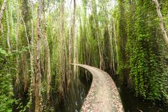 Small road bending through the Melaleuca forests in the ecotourism. Stock Photos