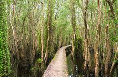 Small road bending through the Melaleuca forests in the ecotourism. Stock Photography