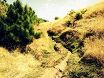 Small road between Brown grass Royalty Free Stock Photography