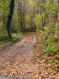 Small road in the forest Royalty Free Stock Photo