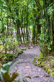 Small road going through a dense bamboo forest Stock Photography