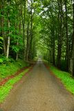 Small road in green forest Stock Photo