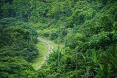 Small road in the green forest trees mountain. Electric pole royalty free stock photos
