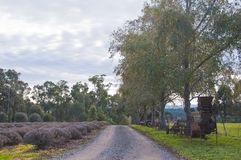 Small road in lavender country farm in afternoon royalty free stock image